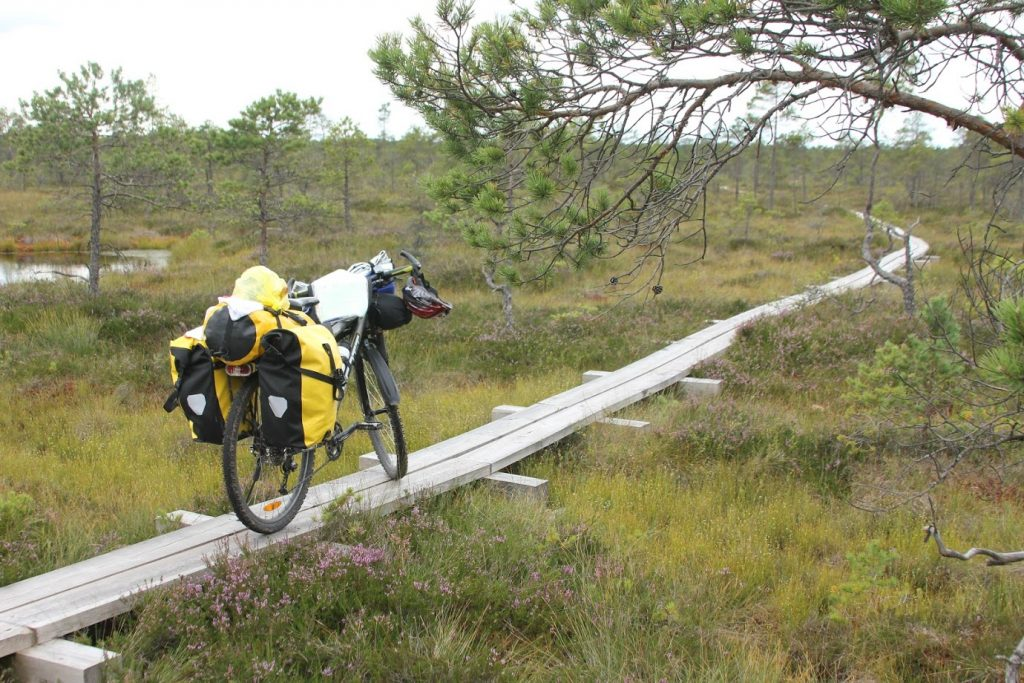 Riding in bog trail