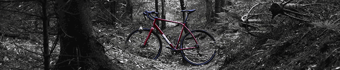 Bike Frame in Forest