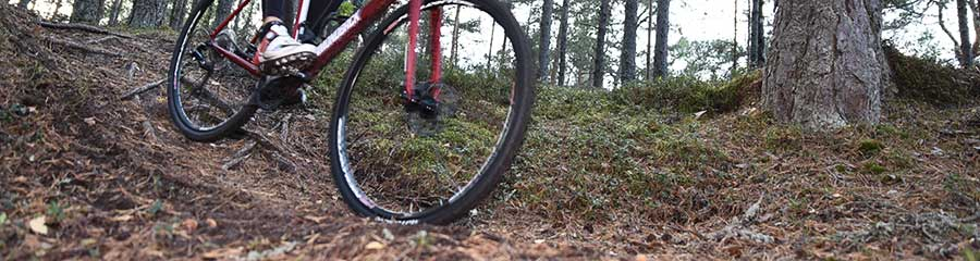 Gravel bike on forest